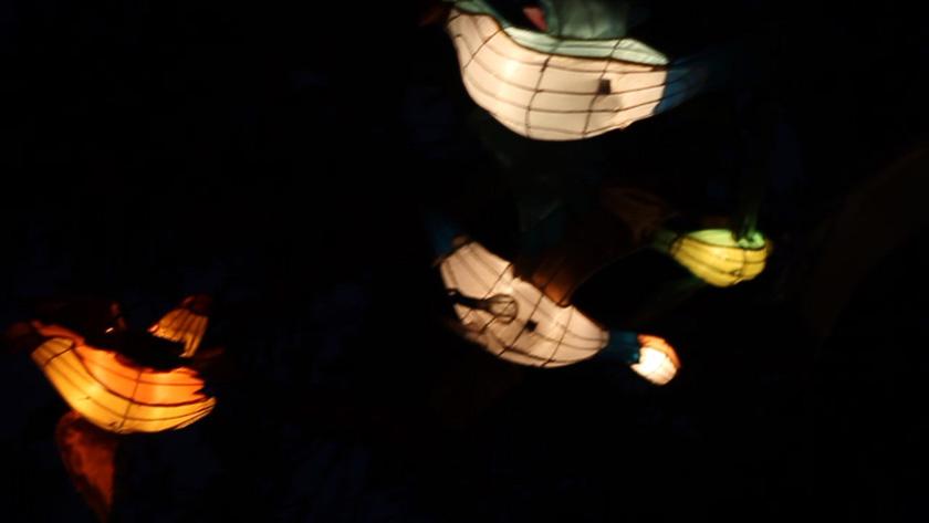 auckland lantern festival 2014 (3)