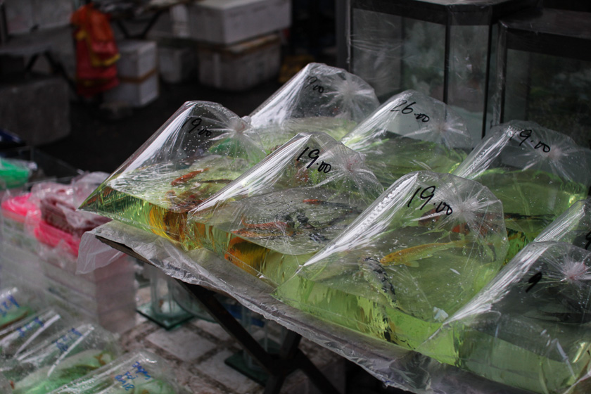 Pudu markets (10)